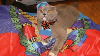 Tima, the winner of the most patriotic cat prize