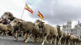 Madrid taken over by hundreds of sheep for annual festival