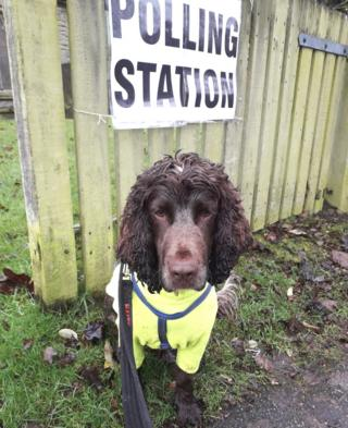 Jarvis the spaniel at St Mary's Family Centre in Arnold, Nottinghamshire