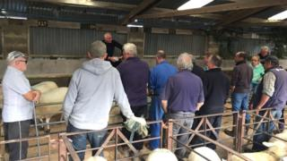 A few people at the Cardigan livestock mart