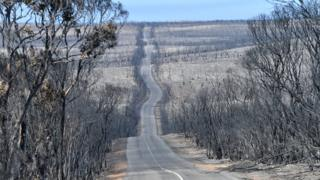 Scorched trees line a long and windy road affected by bushfires at Flinders Chase National Park on 7 January