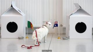 """阿喀琉斯是一只聋猫,日常工作是在圣彼得堡博物馆地下室捕鼠,他是2018年世界杯的官方动物""""预言家""""。"""