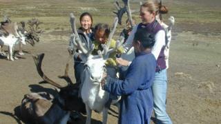 White reindeer in Mongolia
