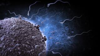 Simulación de espermatozoides humanos acercándose para fertilizar a un óvulo.