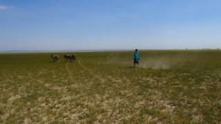 Maasai women with donkeys in field