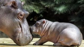 Jumlah binatang yang dilahirkan setiap harinya, baru bisa diketahui setelah semua spesies diteliti.