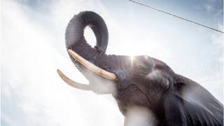 'விளையாடுங்கள், வேட்டையாடாதீர்கள்' - யானை குறித்து 11 சுவாரஸ்ய தகவல்கள்
