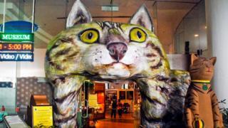 В Музее кошек в Северном Кучинге сделана попытка отследить 5 тысяч лет отношений кошки и человека