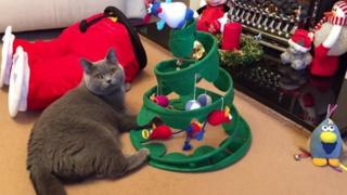 Cat sitting with Christmas decorations