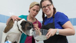 Ray the boxer with vet Erin Beale and owner Jasmine Quick