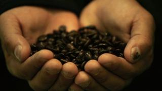 Farmer hold coffee beans in hands