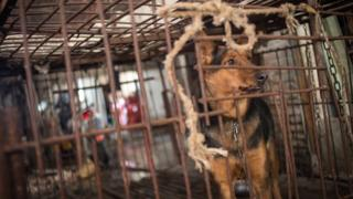 A dog seen in a cage in China before it is killed for its meat