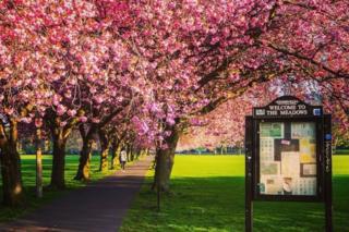 Graham Paton took this in Edinburgh's Meadows