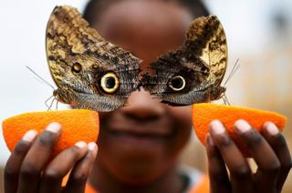 Boy posing with butterflies