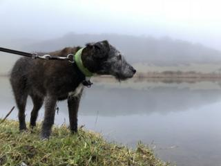Patterdale terrier looking out over Collochan Loch near Dumfries.