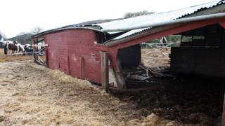 Collapsed pony shelter