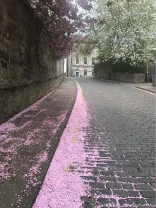Street and blossom