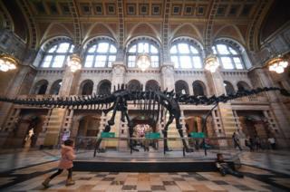 Dinosaur bones on show in Glasgow