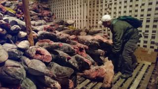 A handout photo made available by Ecuador's Ministry of Environment shows protected species found inside a Chinese ship that was intercepted in the Galapagos Islands, Ecuador, 15 August 2017.