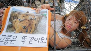 A campaigner protests against the dog meat trade at Seongnam market