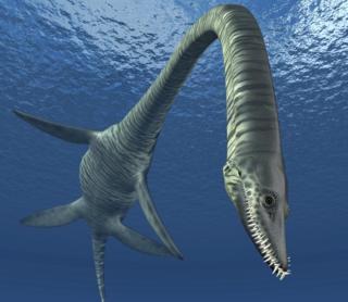 A plesiosaur