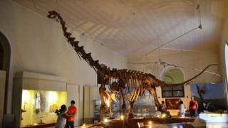 Dinossauro no Museu Nacional
