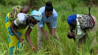 La technologie au service de l'agriculture en Côte d'Ivoire