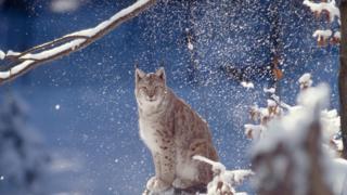 Báo cáo này dự tính số lượng động vật hoang dã thế giới đã giảm gần 60% kể từ năm 1970
