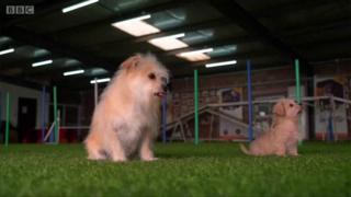 Cachorro clonado