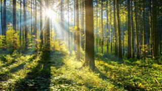 Енглеска је засадила око 1.420 хектара, Велс 520, а Северна Ирска 240