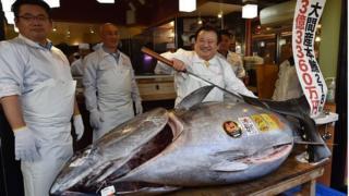 Le thon vendu à un prix record provient des eaux du nord du Japon.