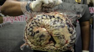 Indonesian police display one of the 657 dead and frozen pangolins in Surabaya, East Java, on August 25, 2016