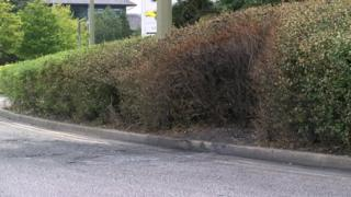 A burned hedge marks the scene where a car crashed and burst into flames in Cowley