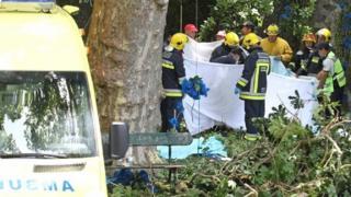 Pohon tumbang di Madeira