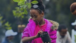 فتاة تزرع شجرة