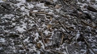 Huesos en el lago Roopkund, en el Himalaya