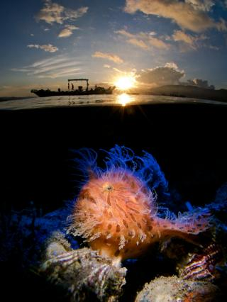 Fisherman at work and a Hairy Frogfish underwater