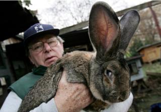 A giant rabbit - not Simon