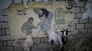 Goats in front of an Oxfam sign in Haiti