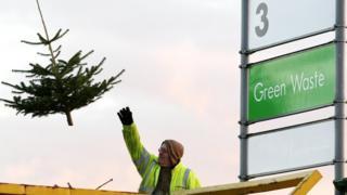 man throws christmas tree into waste