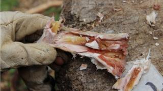6주간 저장된 뼈 골수