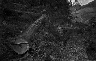 Loggers, Grisdale