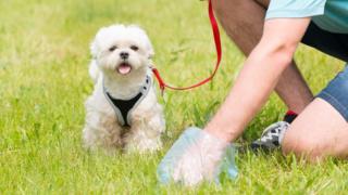 Dog walker picks up pet's mess