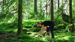 Mujer recolectando frutas en el bosque.