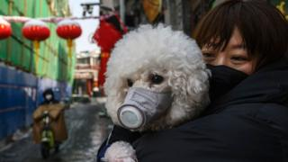 прохожая с собакой в маске