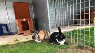 Kittens rabbits in the hutch