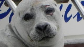 Seal in Littleport