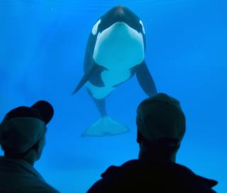 People look into a tank at a killer Whale at SeaWorld in San Diego