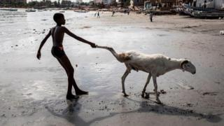 A young sheep farmer drags one of his sheep toward the sea in order to clean it in Dakar on July 28, 2020, ahead of the Muslim Eid al-Adha (Festival of Sacrifice), known as Tabaski in Western Africa. - Sheep farmers are starting to fill the streets of the Senegalese capital with their sheep ahead of the festival, when prices of their anmials can range from one hundred thousand West African Francs(CFA) to four million CFA (7000 US dollars).