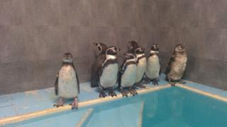 Penguins in Mumbai zoo